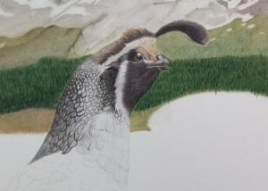mt-shasta-quail