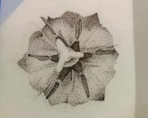 stippled-tulip-2